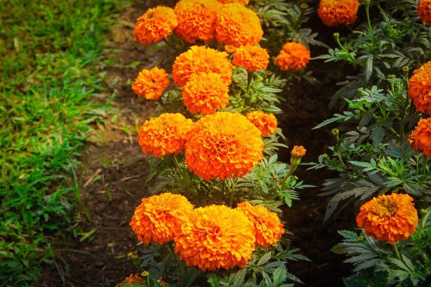 Flowers Garland Floral Plant  - raselmahmud19999 / Pixabay